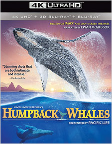 Humpback Whales (4K Ultra HD Blu-ray Disc)